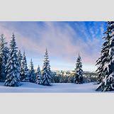 Taiga Landscape Winter | 1920 x 1200 jpeg 339kB