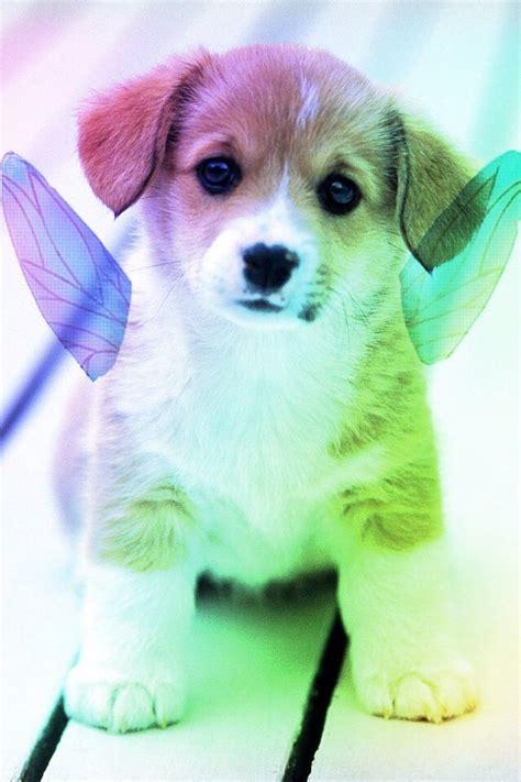 rainbow puppies pixie rainbow puppy rainbow animals