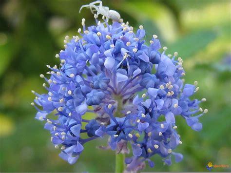 Fleurs Qui Resistent Au Vent by Photo Une Araign 233 E Sur Une Fleur De C 233 Anothe