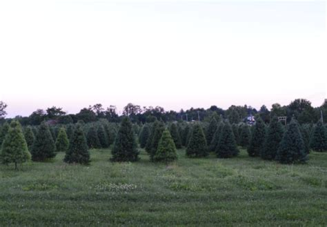 christmas tree farms near indianapolis do these 10 things in indianapolis at christmastime