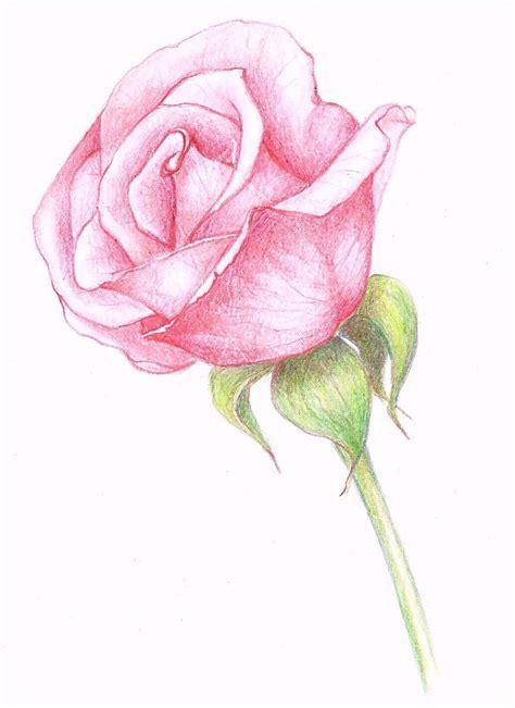 Rose Drawings In Pencil Drawings A Pink Rose