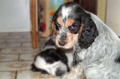 evil puppy evil