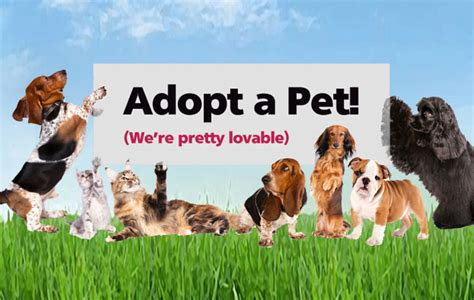 adoptable dogs lcha pet adoption event at hodge dodge tomorrow easttexasradio