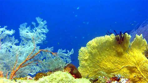 Raja Ampat ? The world's largest biodiversity