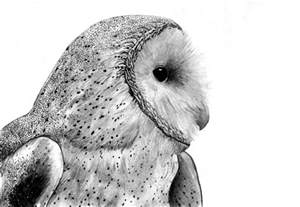 Barn Ol Barn Owl By Skoppio On Deviantart