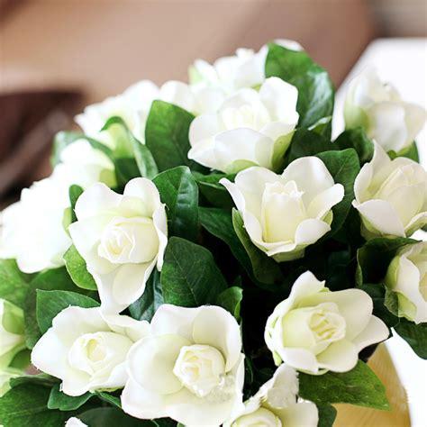 imagenes de flores gardenias gard 234 nia uma flor que encanta por sua beleza e perfume