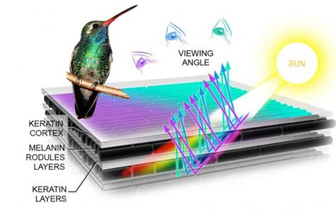 structural color how birds make colorful feathers bird academy the
