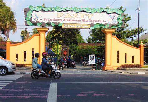 Jual Lu Hias Yogyakarta pasar jual beli satwa dan tanaman hias jogja