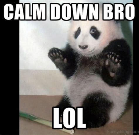 Meme Panda - 80 cute panda memes