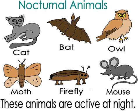 printable nocturnal animal book nocturnal animals google search kerryation science and