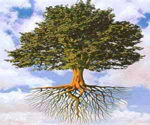 significato dei fiori nei sogni sognare un albero significato degli alberi nei sogni