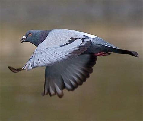 Pigeon Dot Eco S M L stop the pigeon l o b a b l a n c a dot c o m