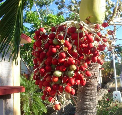 palm tree made of fruit bright palm tree fruit photos jpg hi res 720p hd