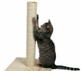 Stop Cat Scratching by Arranhador Para Gatos Como Fazer