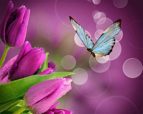 Original Mesin Jahit Butterfly Ja 1 bilder schmetterlinge tulpen blumen