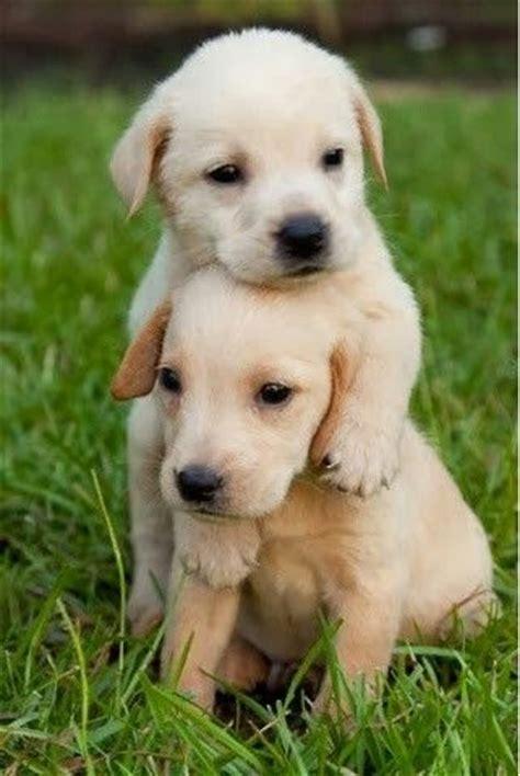 puppies hugging puppy hug pictures puppys