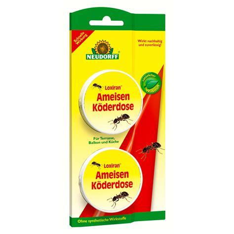 was tun gegen ameisen im haus was hilft gegen ameisen ameisen bek mpfen was hilft gegen