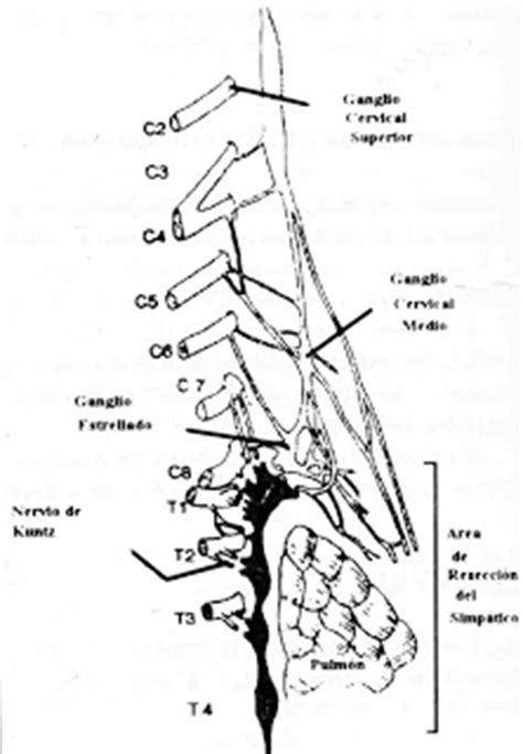 cadena ganglionar simpatica cervical cirug 237 a vascular actualizada rol de la simpatectom 205 a en