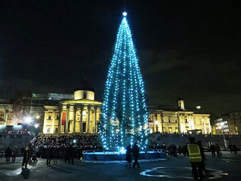 tree trafalgar square the 20 most beautiful trees in the world