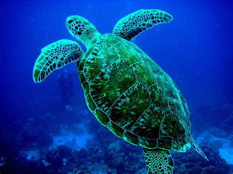 pictures of animals arolew pictures of marine animals marine animals pictures of sea animals