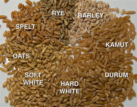 7 types of whole grains types of grains with names www pixshark images