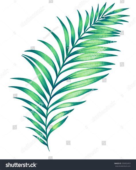 large illustrated palm leaf hand drawn illustration