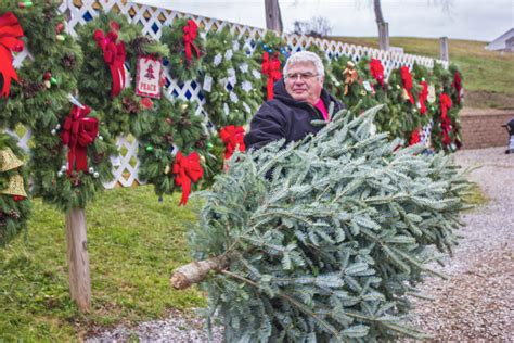 hunt for the perfect christmas tree a strong tradition