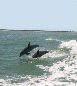 turtle mound boat tours new smyrna beach see dolphins and manatees turtle mound river tours