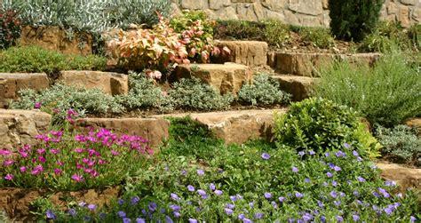giardini rocciosi progettare il giardino roccioso