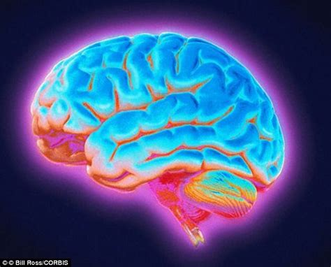 May Had A Brain by Could The Way We Are Born Affect Our Brain Babies