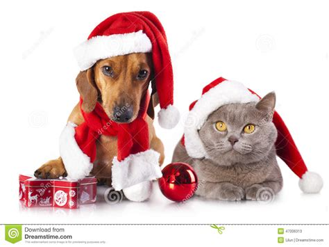 santa hats for dogs and cat and kitens a santa hat stock photo image