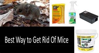 best way to get rid of mice the best mouse killers and