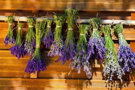 fiori secchi fiori secchi in cornice