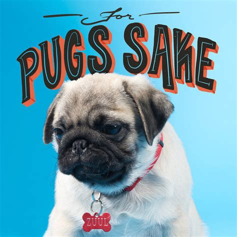 pug puns pug puns that will brighten your day