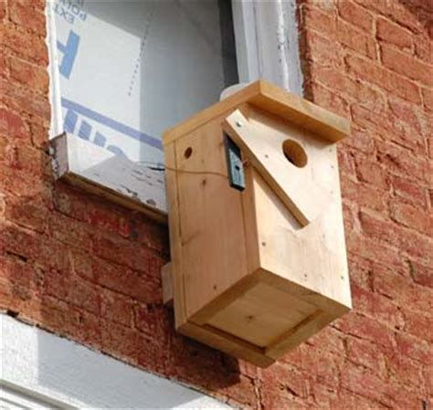 northern flicker and european starling nest box competition