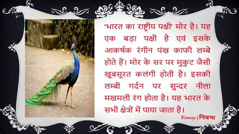 National Bird Of India Essay by Essay On National Bird Of India भ रत क र ष ट र य पक ष पर न ब ध