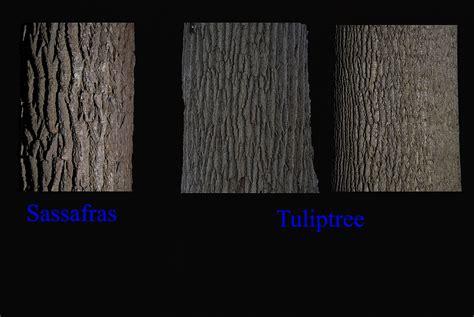 michigan tree michigan trees the michigan nature guy s