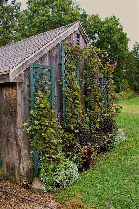 Garden Shed Cambria by 1000 Images About Garden On How To Grow