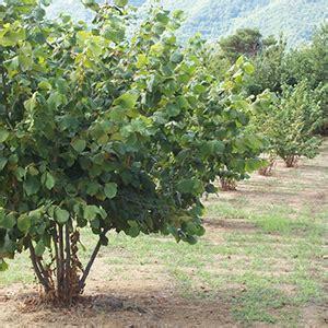piante da frutto in giardino 10 alberi da frutto da coltivare nell orto in giardino o