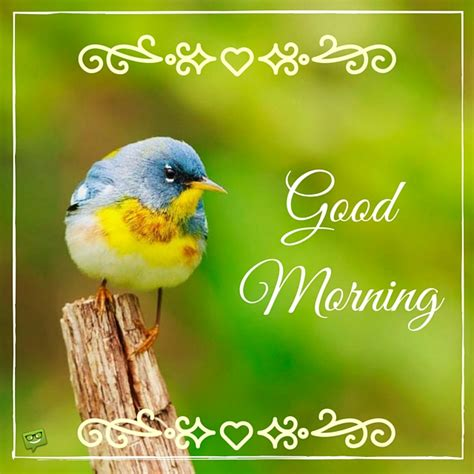 good morning wishes with birds pictures images page 11