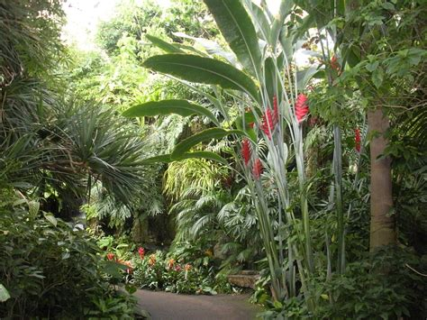 tropical plants for tropical trees shrubs and plants a photo gallery