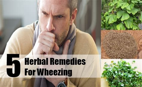 5 wheezing herbal remedies treatments and cures search