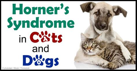 horner s in dogs horner s diagnosis and treatment for your pet
