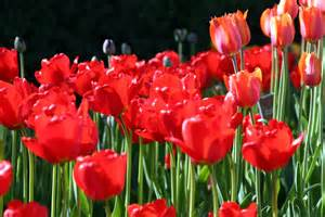 Feng Shui   articles   Real Estate   Flowers in your garden