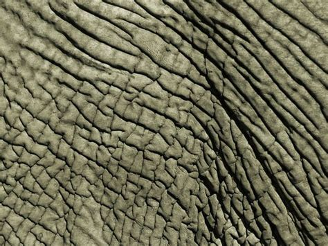 animal pattern photography animal pattern photos picture gallery desktop wallpaper