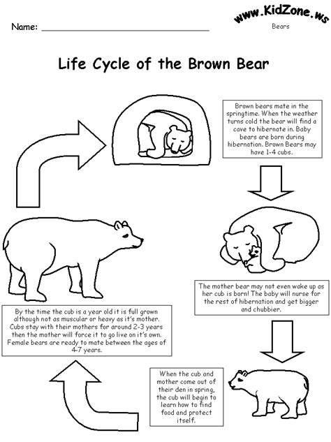 Bear Worksheets Life Cycle Of A Brown Bear With Words Where Is The Arctic Earth Coloring Page