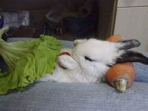 bunny bed 20 cute bunny pictures part 2 amazing creatures