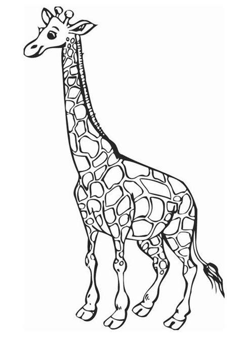 imagenes jirafas colorear dibujos para imprimir y colorear jirafa para colorear