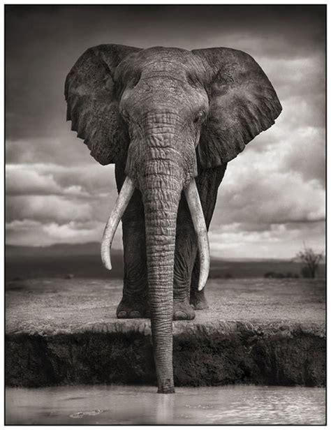 fotos en blanco y negro animales imagenes en blanco y negro de animales imagui
