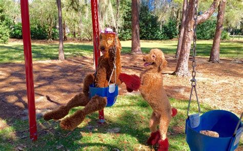 swinging with friends stories amazing dogs can swing in swing play the piano and more